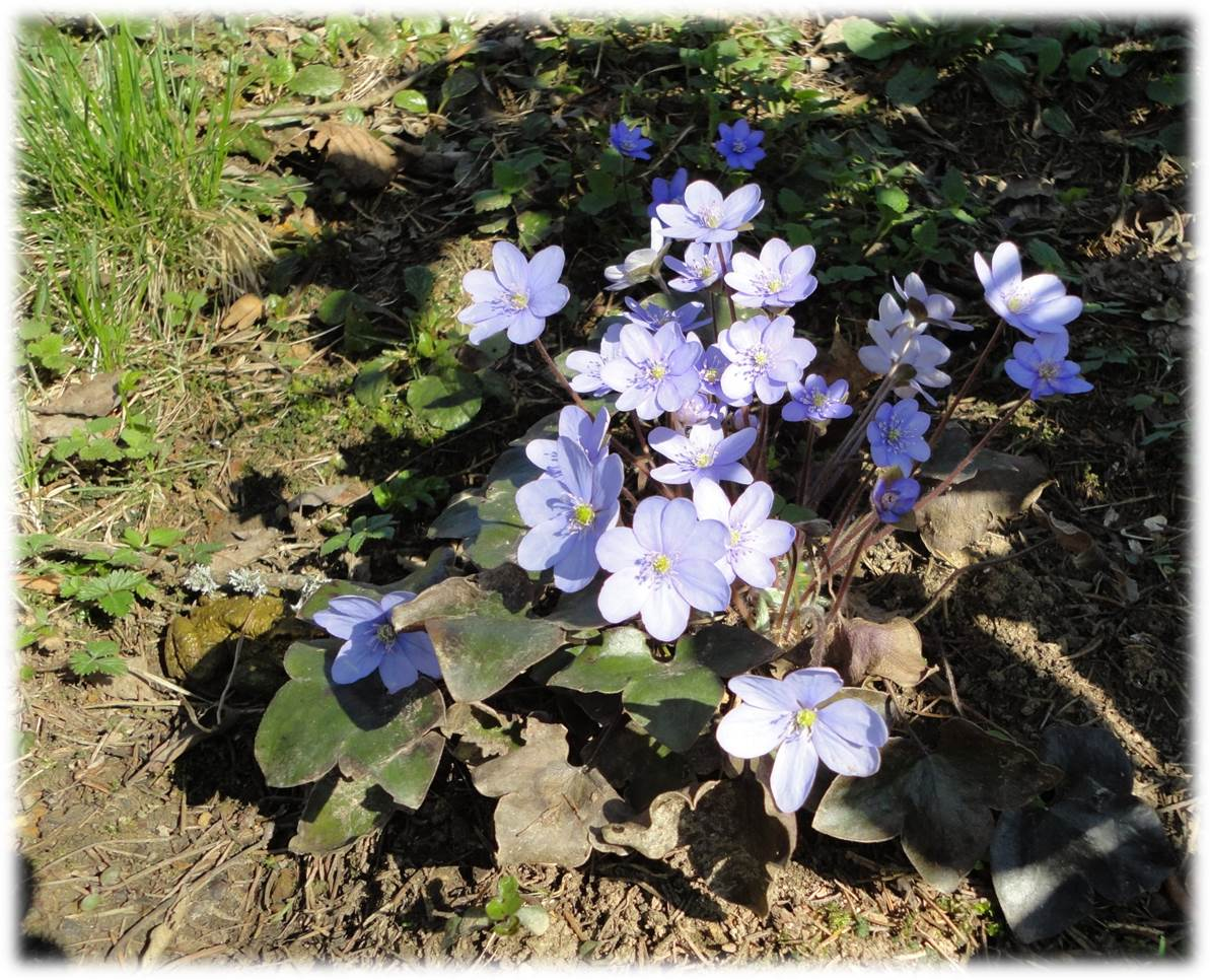 Frühlingsblumen-Nest